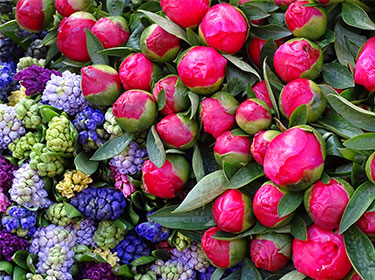 Join the crowds in Columbia Market on Sunday morning to see the flower sellers in action and browse the independent shops