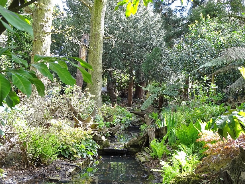 Wander through the foliage and ferns in Golders Hill Park's Stumpery