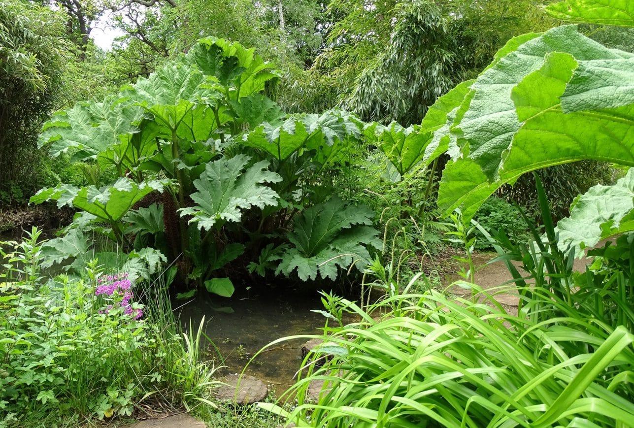 Wander through leafy foliage in Richmond Park's Isabella Plantation