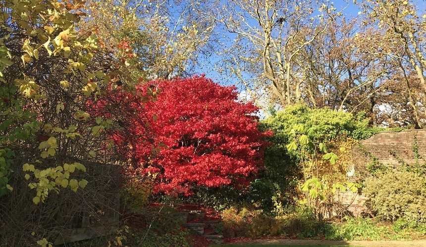 Striking autumn colours at Kenwood House