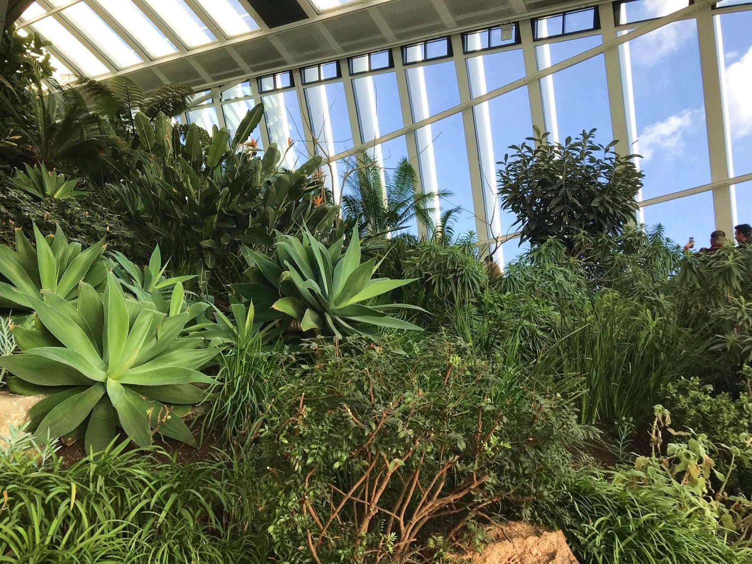 Get great views of London from the Sky Garden