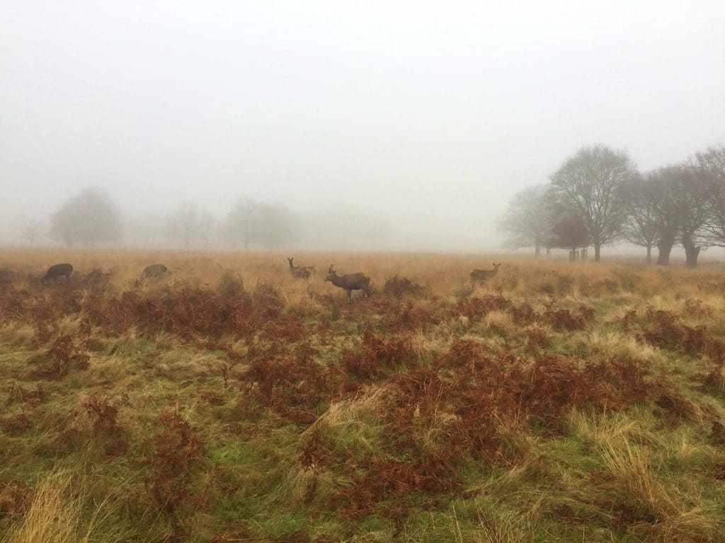 Visit Richmond Park in November to see deer and spectacular autumn colours