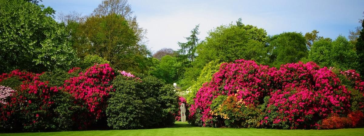 Azaleas at Kenwood in May